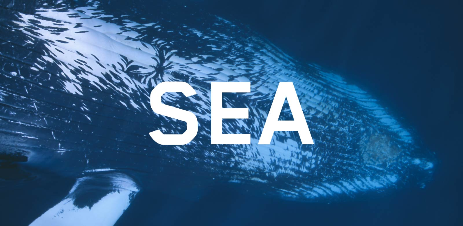 Under Pressure - Sea
