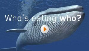 Who's eating who? - activity screenshot
