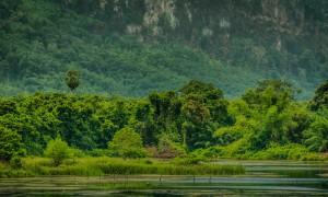 tropical rainforest image