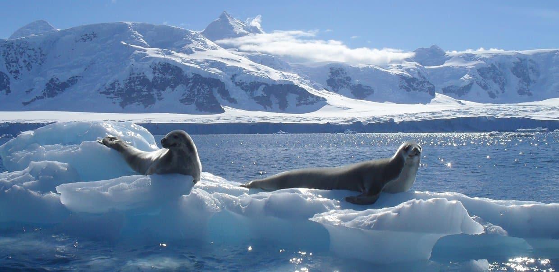 The marine environment...