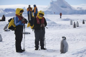 Two tourists are approached by a curious penguin chick
