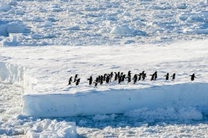 penguins on an ice sheet