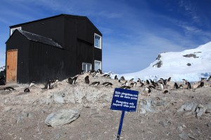 Sign stating 'Penguins only beyond this point.'