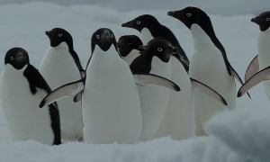 view of penguins