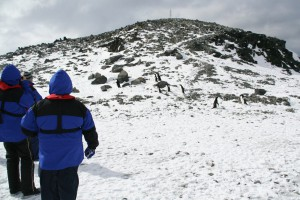 Blue parka tourists climbing a hill, to view penguin rookery,