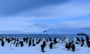 Penguin colony with a tourist ship in the background