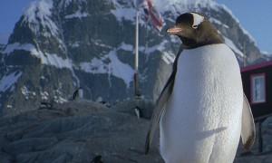 Penguin outside a cabin