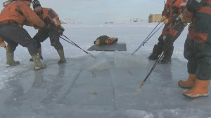 A chain saw is used to cut sections into the ice, these are then pulled out and then divers drop into the dark icey waters below.